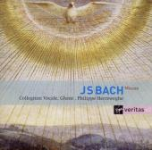 Album artwork for Bach: Masses BWV233-236 etc. / Herreweghe